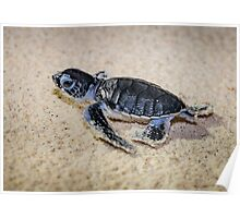 Baby Green Turtle on his way to Survival Poster