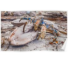 Snack Time for the Coconut Crab Poster