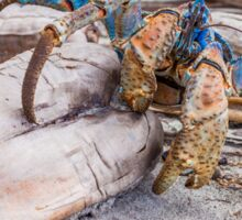 Snack Time for the Coconut Crab Sticker