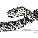 Rough Scaled Snake by SnakeArtist