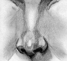 nose by Claudia Dingle