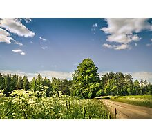 Bright summer day Photographic Print