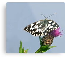 Checkered butterfly Metal Print