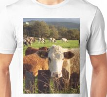 Cows of Llanfairfechan Unisex T-Shirt