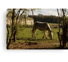 Grey At Tarvit Farm Canvas Print