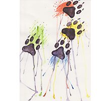 Puppy Paws Photographic Print