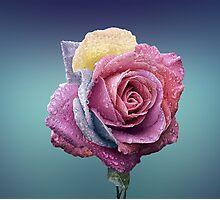 Rainbow Rose Photographic Print