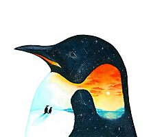 Penguin Sunset Photographic Print