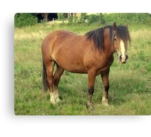 A Horse in Llanfairfechan. Canvas Print