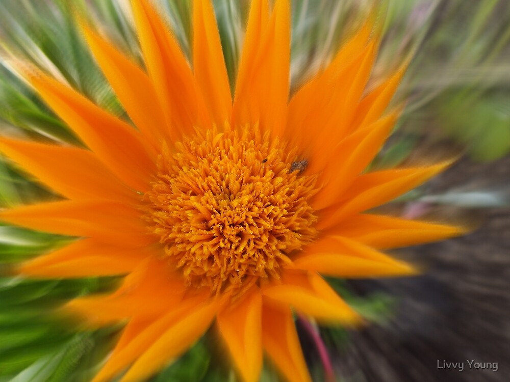 Starburst. by Livvy Young