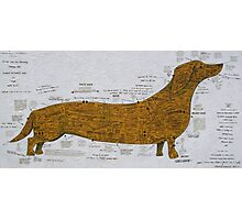 The Superiour Sausage Dog Photographic Print