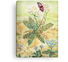 Butterfly on daisies Canvas Print