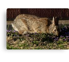 Eastern Cottontail Rabbit in the Flowers Canvas Print