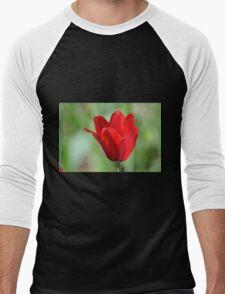 Backlit Red Tulip Men's Baseball ¾ T-Shirt