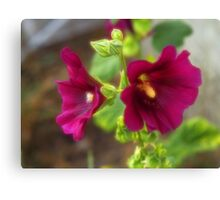 Hollyhock Dreams Canvas Print