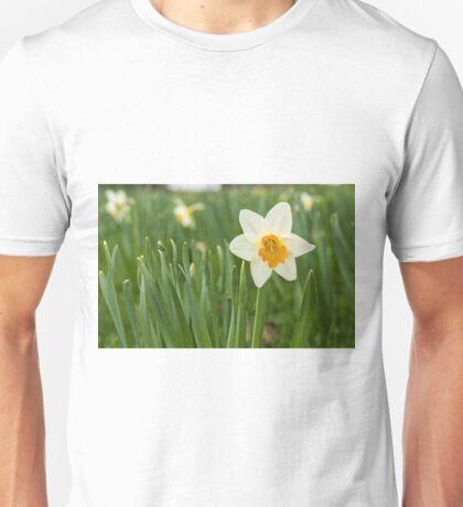 Lone Daffodil in spring Unisex T-Shirt