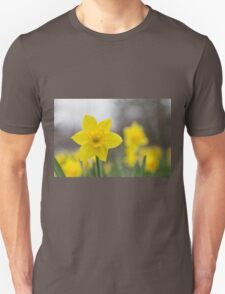 A lone daffodil in spring T-Shirt