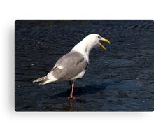 Seagull Mouth Open Canvas Print