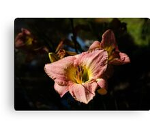 Limelight Lily Canvas Print