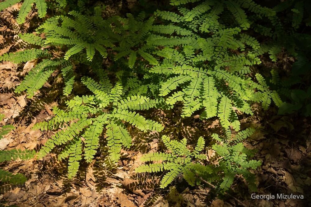 Sunlit Forest Floor Treasures by Georgia Mizuleva