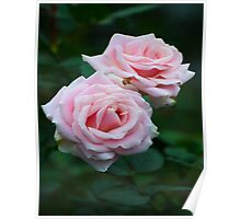 Love Love Pink Roses Poster