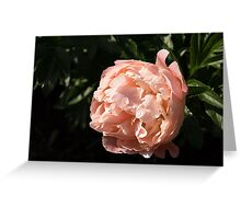 Classic Pink Beauty, Illuminated Greeting Card
