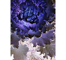 Kale Blues Photographic Print