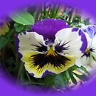 Rainy Day Pansy Vignette by BlueMoonRose