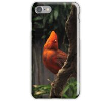 Andean cock-of-the-rock iPhone Case/Skin