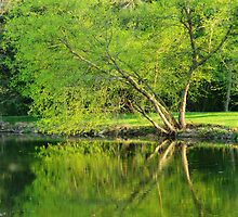 More Spring Green Reflections  by lorilee