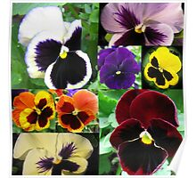 Just Pansies Collage Poster