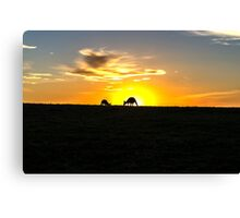 Silhouette of Kangaroos at  Sunset Canvas Print