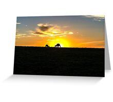 Silhouette of Kangaroos at  Sunset Greeting Card