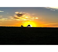 Silhouette of Kangaroos at  Sunset Photographic Print