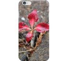 Tiny seedling in the paving stones iPhone Case/Skin