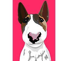Boyka Bull Terrier  Photographic Print