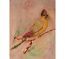 Colorful Bird  Photographic Print