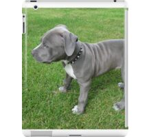 Gorgeous Baby, Blue Pit Bull Puppy Dog With Wrinkles iPad Case/Skin