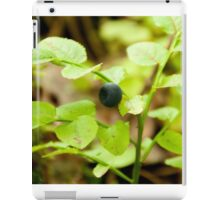 wild bush of blueberry with fruits in sunny forest during summer iPad Case/Skin