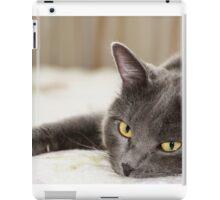 Closeup short hair gray cat iPad Case/Skin