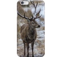Twelve Pointed Stag in the Snow iPhone Case/Skin