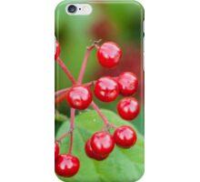 Ripe viburnum  iPhone Case/Skin