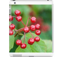 Ripe viburnum  iPad Case/Skin