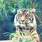 tiger... by geisha