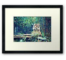 tiger... Framed Print