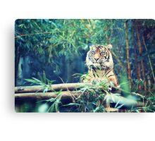 tiger... Canvas Print