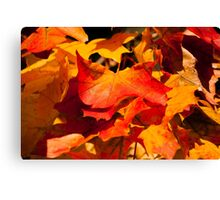 large orange and yellow maple leaves in autumn  Canvas Print
