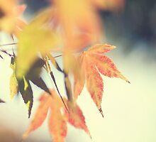 i will fall... but i will grow... by geisha
