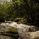 Golitha Falls by Samantha Higgs