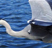 Grey Heron Sticker